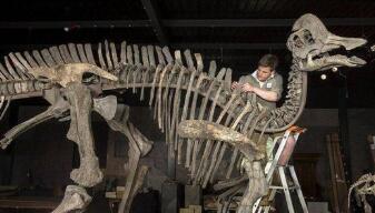美媒:稀有化石被发现!孵蛋时,恐龙一家遭遇灭顶之灾